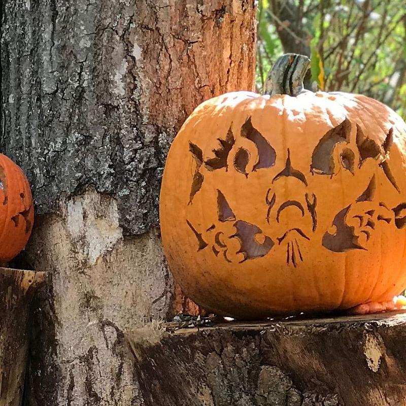 31 Easy Halloween Pumpkin Carving Ideas That Impress In 2021